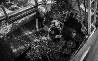 il-pescato-del-giorno-foto-salvatore-dangelo-620x400